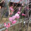 川崎市中原区で浄土真宗本願寺派といえば・・・・