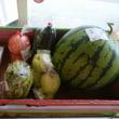果物と野菜が最盛期を迎えたようです☆