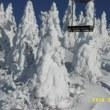 蔵王山噴火警報が出て、蔵王温泉スキー場大賑わい。