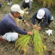 箕面市立西小学校5年生が、稲刈りを体験しました!