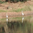 生態園の野鳥