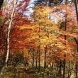 嵐山渓谷散歩〈12月2日〉