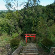 里山体験プログラム「赤トンボしらべ」