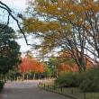 秋色の万博公園 (14)