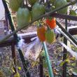西城秀樹さんの市民農園プロジェクト