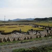 南三陸町で田んぼアート稲刈り刈り取り体験会が開催されました