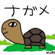 8月17日「ゾウガメ」