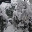 1月11日、大雪