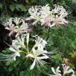 庭の花少々