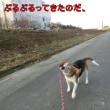 冬用散歩道