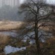 土師ダムから続く川2