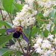 ヤマボウシの白い大きな花と白くて小さいネズミモチが花の盛りです