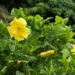 過ぎし21年前、仙台市の郊外にある作並温泉に滞在したささやかな想いでは・・。