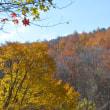 黄と赤茶と黄金色の午後の森は、Lady's Day。