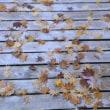松平郷園地は落ち葉色