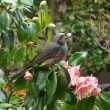 花と小鳥 180317
