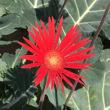 締めくくりの花