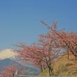 高嶺より 女神降り立つ 松田山