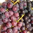 ブドウの季節