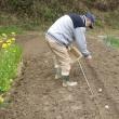 ようやくジャガイモの種芋(シンシア)を植え付け