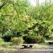 武蔵野公園も秋の訪れです その5