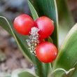 冬・・・草花の果実