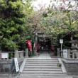 八雲神社で名残の八重桜