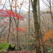 ブナ清水の紅葉