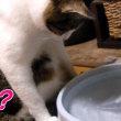 猫に自動給水器っているの?停電したら止まるんっですけど😪