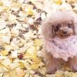 黄色い絨毯☆