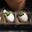久しぶりに暑っ!!・・ハイビスカスと卵の殻の植木鉢