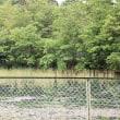 今朝の小山池