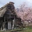世界遺産白川郷・岐阜/The World Heritage Shirakawa-go Gassho Style Houses