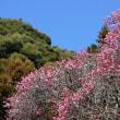 梅と竹&ネコ・岩国吉香公園 180227