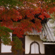 再度長圓寺に行ってきました