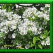112.春の花