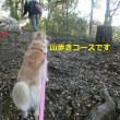 公園散歩の2