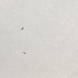 雪面に現れた虫
