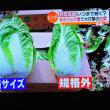 1/24 キャベツ、白菜、大根 捨ててはいけないよ