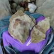 馬島5月25日の化石