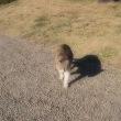 猫と女が通る場所。