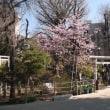 『鳩森八幡神社。』