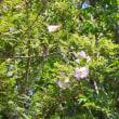 平塚 花菜ガーデンにて