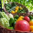 家庭菜園からの収穫と黄アゲハの幼虫