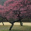 梅は咲いたし、桜ももうすぐ