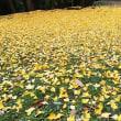 イチョウの絨毯 と 温羅(うら)👹伝説