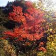 むかし道を紅葉ハイキング