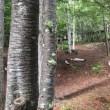 ジャンボリー 2日目 ハイキング