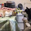 「食べちゃうぞ!!腹ペコ魔犬の超能力」