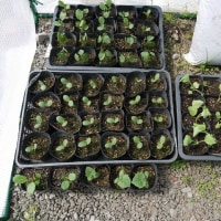 庭先の様子&苗の植え付け開始!
